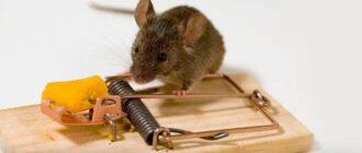 kak izbavitsya ot myshej v kvartire i v chastnom dome Как избавиться от мышей в частном доме, на дачном участке и в квартире? Обзор эффективных средств